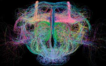 Imagen: El proyectoma total de los tractos neuronales del cerebro de una Drosophila (Fotografía cortesía del Instituto Allen para la Ciencia del Cerebro).