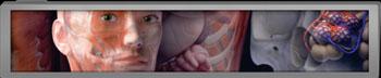 Imagen A: Colecciones de anatomía humana de Zygote (Fotografía cortesía de Zygote).